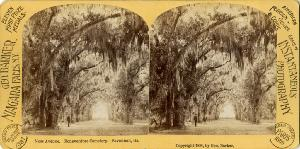 Cemeteries and Parks -- Moss Avenue, Bonaventure Cemetery, Savannah Ga.